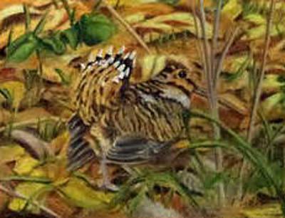 Woodcock Mating Season Original