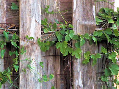 Photograph - Wooden Fence by Tammy Herrin