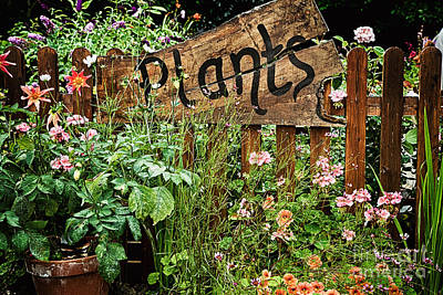 Wooden Plant Sign In Flowers Art Print