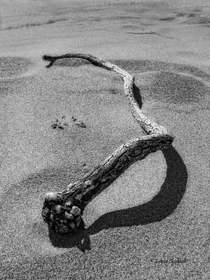 Photograph - Wooden Serpent by Donna Blackhall