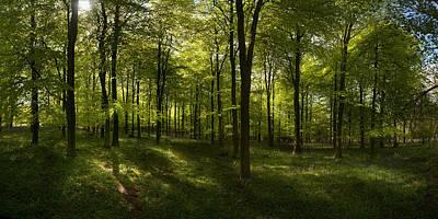 Ashford Photograph - Woodland by Chris Laurens