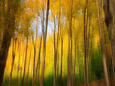 Photograph - Woodland Impression by Fred LeBlanc