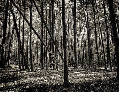 Photograph - Woodland by Lourry Legarde