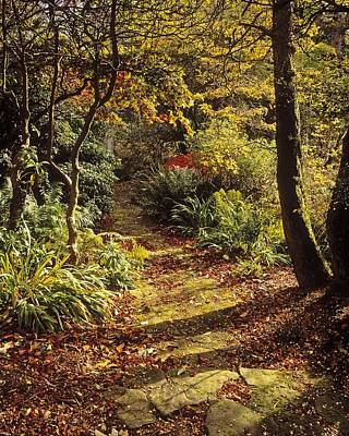 Down In The Garden Photograph - Woodland Path, Mount Stewart, Ards by The Irish Image Collection