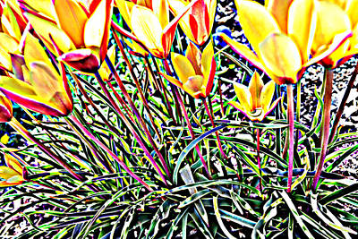 Photograph - Woodland Tulips by Diane montana Jansson