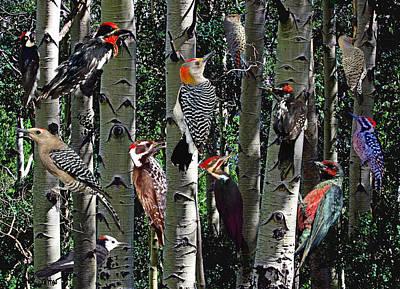 Woodpecker Collage Art Print by David Salter
