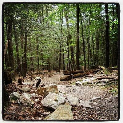 Trail Wall Art - Photograph - #woods #forest #trail #mountains by Ryan Dieter