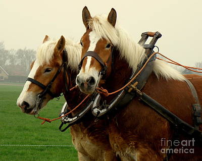 Art Print featuring the photograph Work Horses by Lainie Wrightson