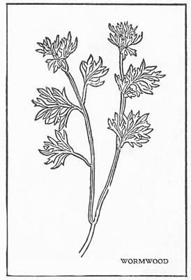 Wormwood, Alchemy Plant Art Print