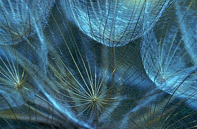Woven Webs Art Print