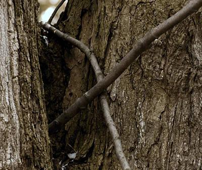 North America Photograph - X Marks The Nut Stash by LeeAnn McLaneGoetz McLaneGoetzStudioLLCcom