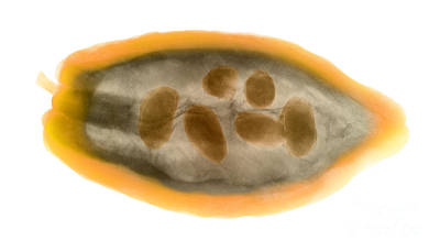 Photograph - X-ray Of A Cocoa Pod by Ted Kinsman