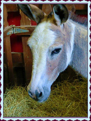 Donkey Digital Art - Yahoo The Mule by Mindy Newman