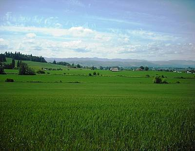 Photograph - Yamhill Countryside by Kelly Manning