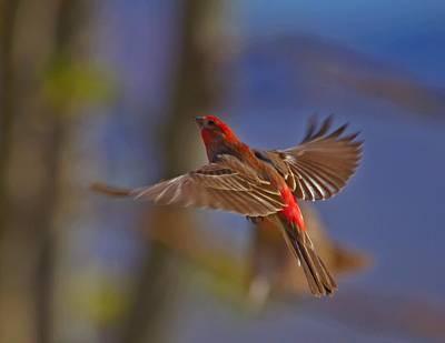Photograph - Yard Birds In Flight by SB Sullivan