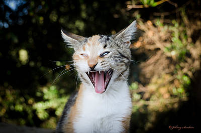 Photograph - Yawning Cat by Johnny Sandaire