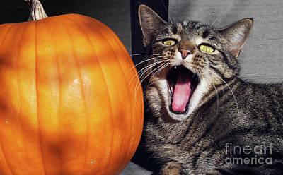 Animal Photograph - Yawning Vineyard Cat by Susan Isakson