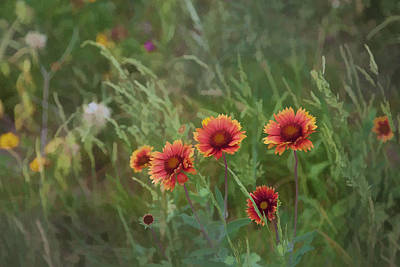 Photograph - Yawn...more Flowers by John Crothers