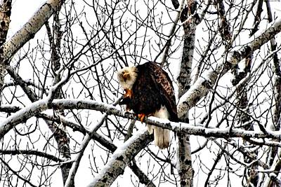 Eagles Photograph - Yeah Baby by Don Mann
