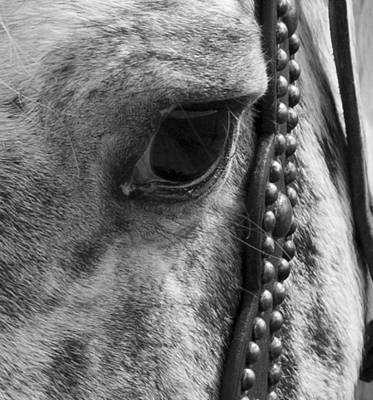 Dressage Photograph - Year Of The Wise by Betsy Knapp
