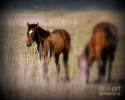 Photograph - Yearling Colt by Priscilla Richardson