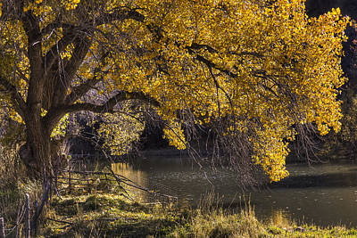 Photograph - Yell Oh Yellow by Andy Bitterer