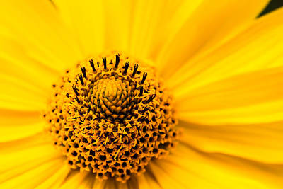 Photograph - Yellow 2 by Daniel Kulinski
