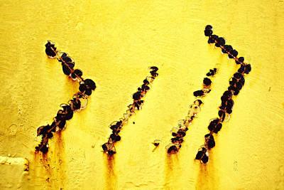 Yellow 3 Art Print by Skip Nall