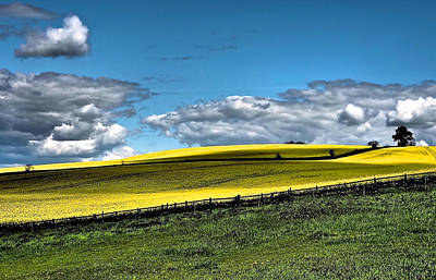 Y120831 Photograph - Yellow And Green Field by Flick's Pix