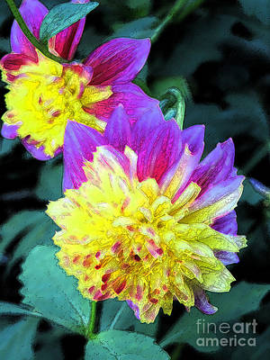 Digital Art - Yellow And Purple Dahlia by Eva Kaufman