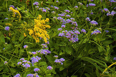 Photograph - Yellow And Violet Flowers by Roena King