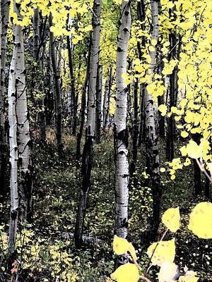 Wall Art - Digital Art - Yellow Aspens by Bill Kennedy