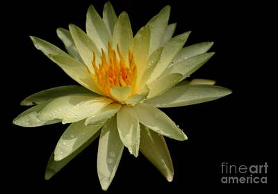 Photograph - Yellow Beauty by Living Color Photography Lorraine Lynch