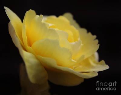 Begonia Garden Photograph - Yellow Begonia by Marjorie Imbeau