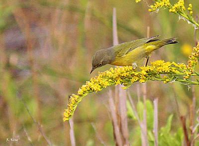 Photograph - Yellow Bird On Yellow Bush by Roena King