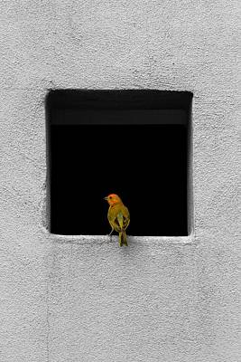 Yellow Birdie On The Window Sill Art Print by Tracie Kaska