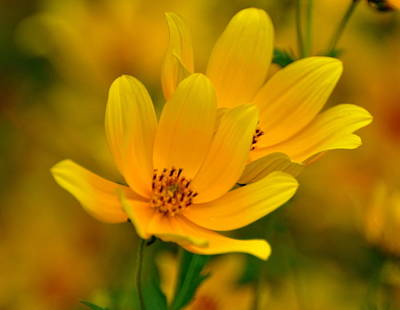 Art Print featuring the photograph Yellow Blaze by Marty Koch