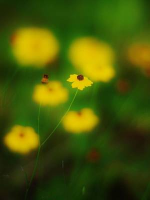 Photograph - Yellow Bliss by Lynda Dawson-Youngclaus