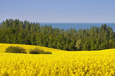 Photograph - Yellow Blue Green by Andy Bitterer