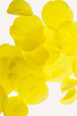 Yellow Original by Brad Rickerby