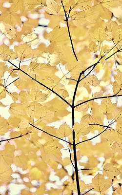 Yellow Brown Leaves Melody Art Print by Jennie Marie Schell