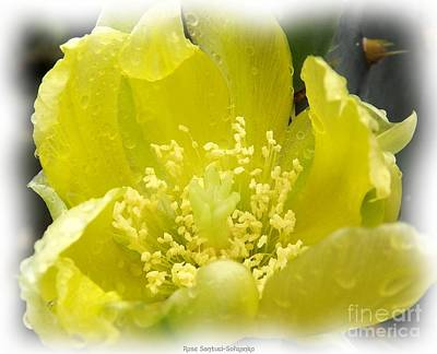 Photograph - Yellow Cactus Flower 2 Watercolor Effect by Rose Santuci-Sofranko