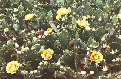 Photograph - Yellow Cactus by Lee Hartsell