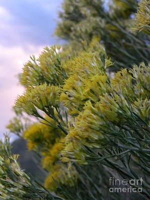 Colorado Photograph - Yellow Colorado Brush by Sara  Mayer