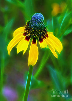 Photograph - Yellow Coneflower by Judi Bagwell
