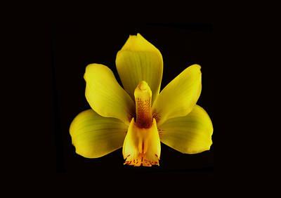 Photograph - Yellow Cymbidium Orchid. by Chris  Kusik