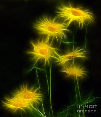 Yellow Daisy Floral  Art Print by Marjorie Imbeau