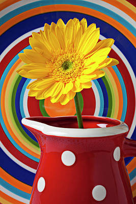 Chrysanthemums Photograph - Yellow Daisy In Red Pitcher by Garry Gay