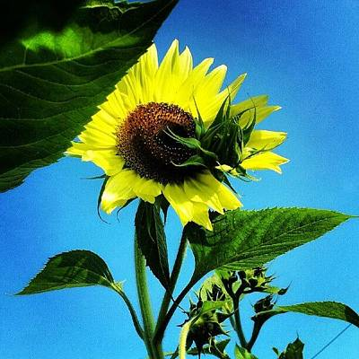 Sunflowers Wall Art - Photograph - Yellow Dancer by Jermaine Young