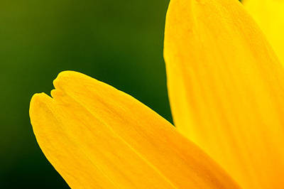 Photograph - Yellow by Daniel Kulinski
